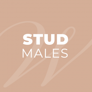 Stud Males